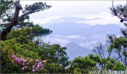 特别是生长在危崖峭壁上的那组松树,苍劲古朴,盘根曲干,技叶舒展,有的