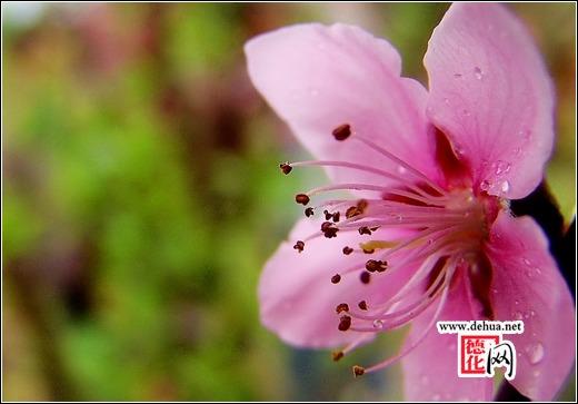 德化桃花岛,春天里的浪漫