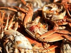 生日宴的规格很高,鲍鱼、螃蟹、大虾、甲鱼都上了。
