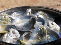 清蒸平鱼。