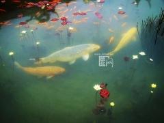 入选奖 《鱼戏莲叶间》   作者:王胜(泉州)
