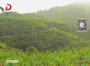 好山好水 打造生态农庄[视]