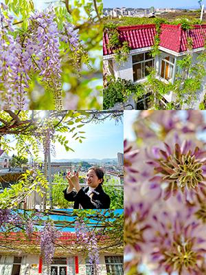 浪漫紫藤花爬满4层小楼