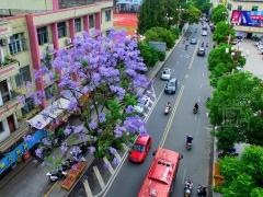那紫色的梦幻,阵阵的花香,让人陶醉,让人难忘。