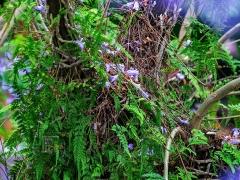 树干上长满蕨类植物。