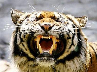 这些装置对保护区内生活的老虎和大象构成了严重威胁.