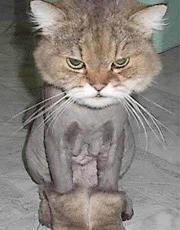 搞笑!小动物剃毛后的超囧模样