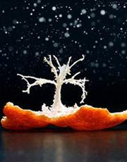 摄影大师眼里的橘子