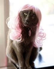 美国设计师推出时尚猫咪假发 造型雷人