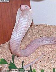 世界上最漂亮的蛇