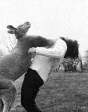 动物袭击人类的超雷瞬间