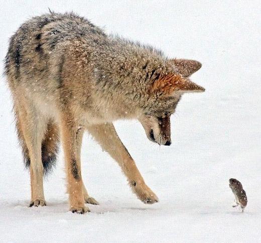 动物也给力 自然界中的武术pk
