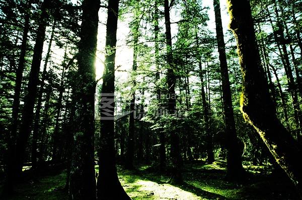 大森林的早晨-德化网图片