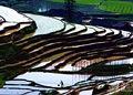 美丽的梯田 (3)