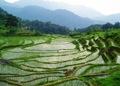 东古寨的田园